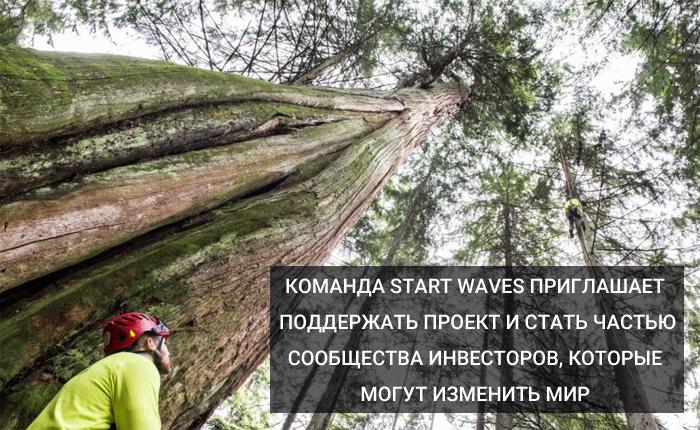 Start Waves
