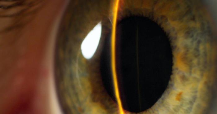 Worldcoin планирует давать людям криптовалюту в замен на сканирование глаза
